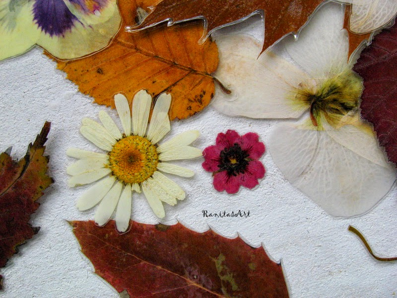 Pressed and laminated flowers and leaves